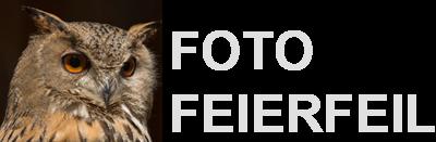 Foto Feierfeil